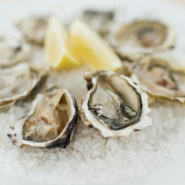 oysters prized by the Ancient Romans