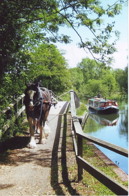 Shire horse pulling Barge on the canal