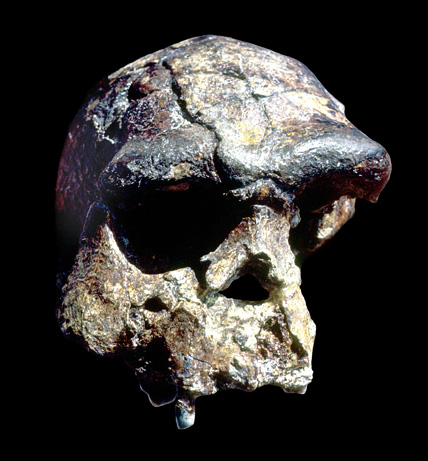 The skull of Peking Man