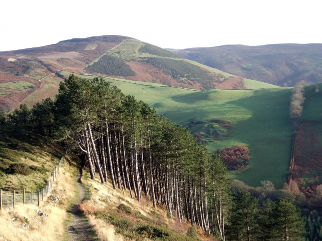 Along Offa's Dyke in the surrounding forests