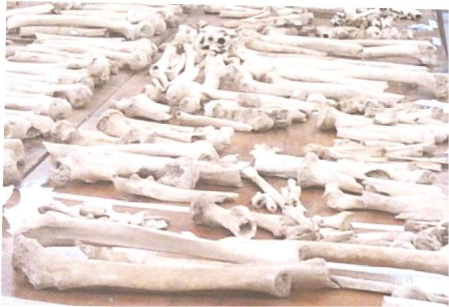 Bones from Cave Burial Lassithi Plataeu