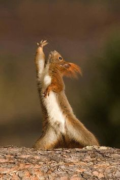 Squirrel dancing 2