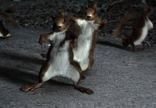 Squirrels Dancing