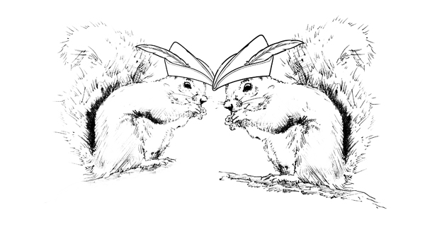 Two Squirrels with hats