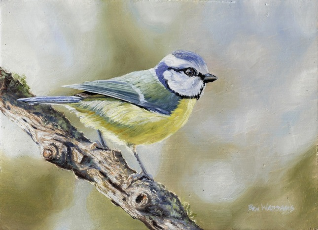 Blue tit by Ben Waddams