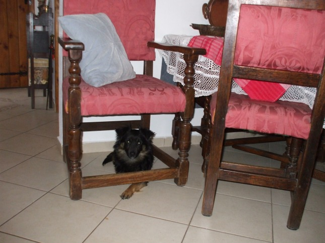 Koko under the chair