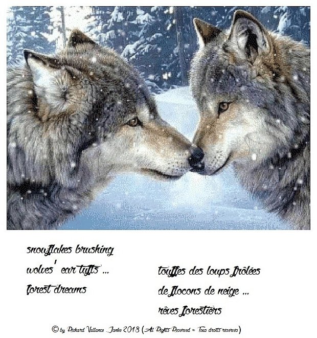haiku snow wolves620