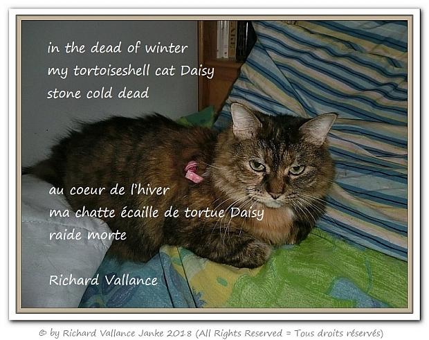 Daisy haiku620