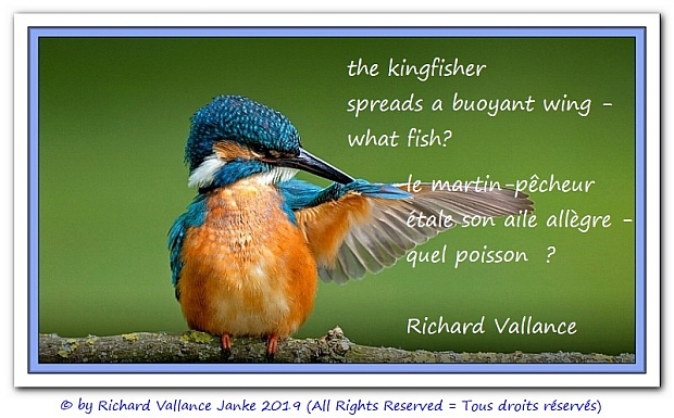 kingfisher haiku 620