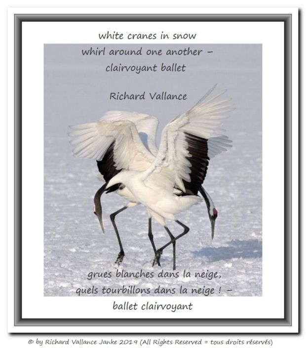 cranes dancing in the snow 620