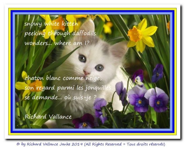 kitten and daffodils haiku 620